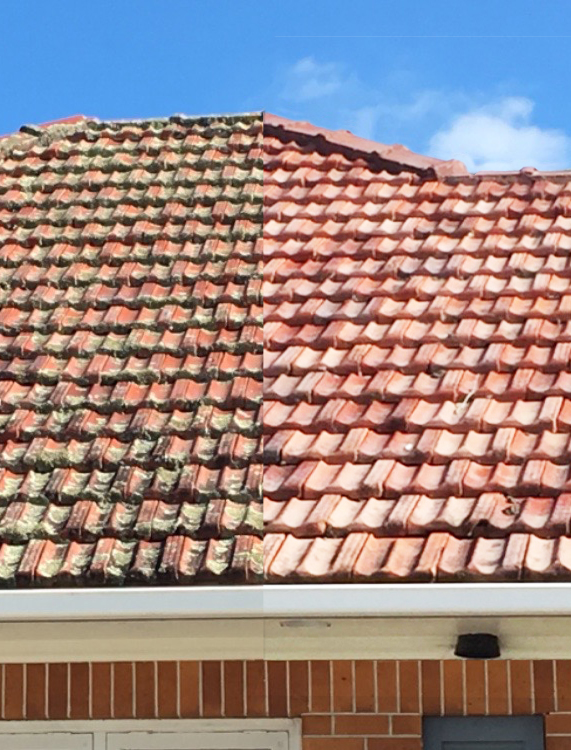 Roof Treatment Before & After